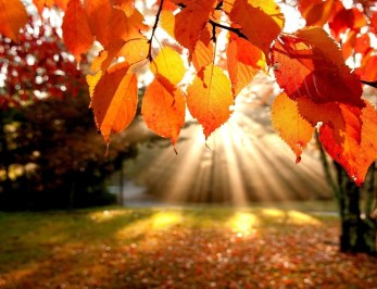 Sunshine through Autumn Leaves