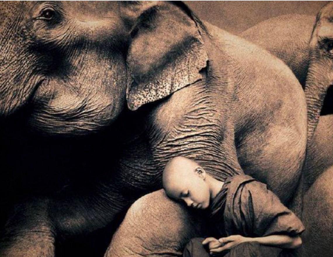 Elephant With Boy