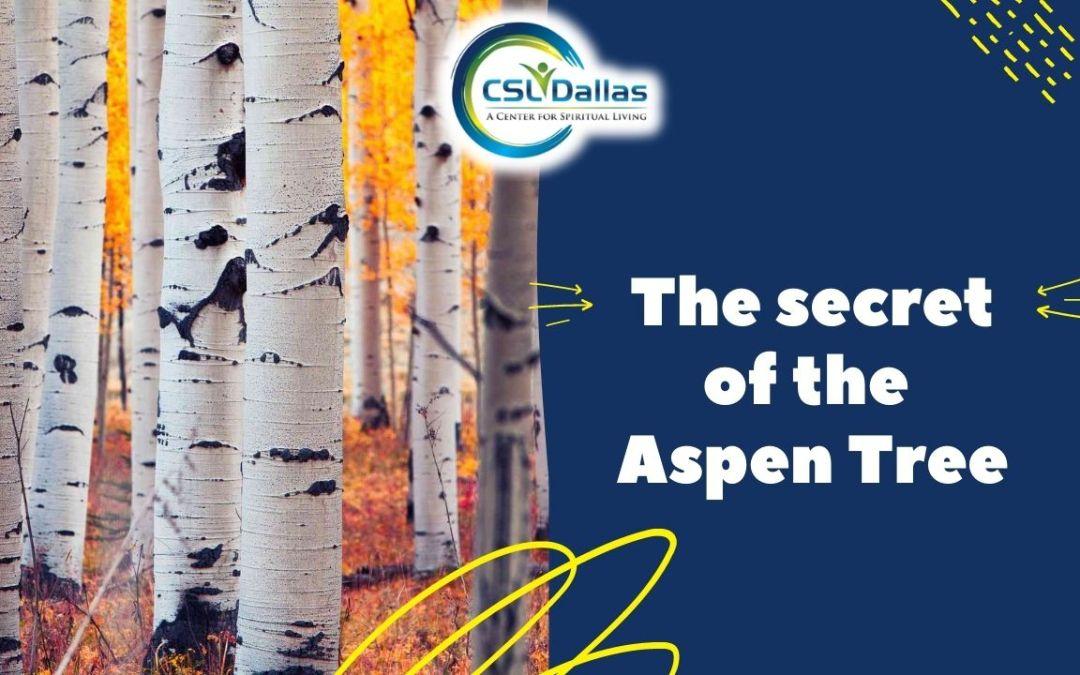 The Secret of the Aspen Trees