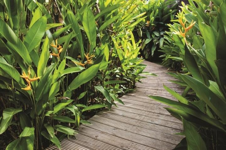 Jardin - Eden Paradise Spa - Ste Luce Martinique