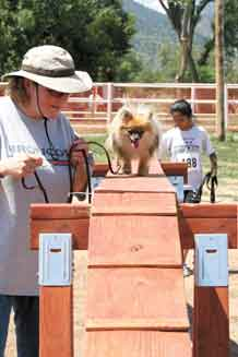 Myrna Rothe leads Annie, her 15-month-old Pomeranian, through the agility course.