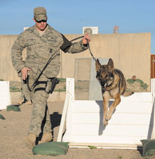 KIRKUK REGIONAL AIR BASE, Iraq - Staff Sgt. Nicholas Pospischil, 506th Expeditionary Security Forces Squadron Military Working Dog handler, and his partner Wodan, a military working dog, train on an obstacle course Jan. 7. This rotation marks the last deployment for Wodan. Sergeant Pospischil and Wodan will soon return to their home station, Peterson AFB, Colo., where Wodan will begin his retirement process. (U.S. Air Force photo/ Staff Sgt. Tabitha Kuykendall)