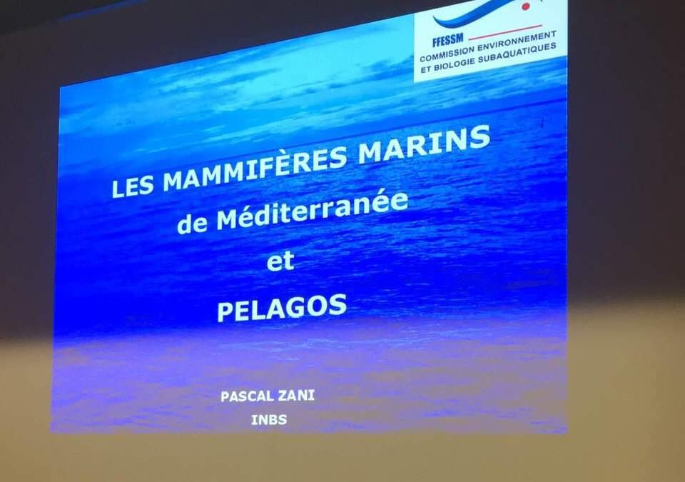 Interview de Pascal Zani sur RadioTemps Rodez