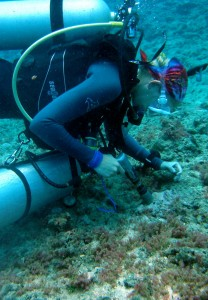 Maggie Johnson collects crustose coralline algae from a shallow coral reef using an underwater drill and scuba tank. Photo by Stella Hein, courtesy of Maggie Johnson.
