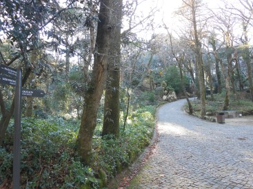 This is the typical Sintra's vegetation