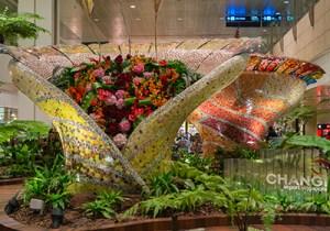 Aéroport Changi : meilleur aéroport du monde