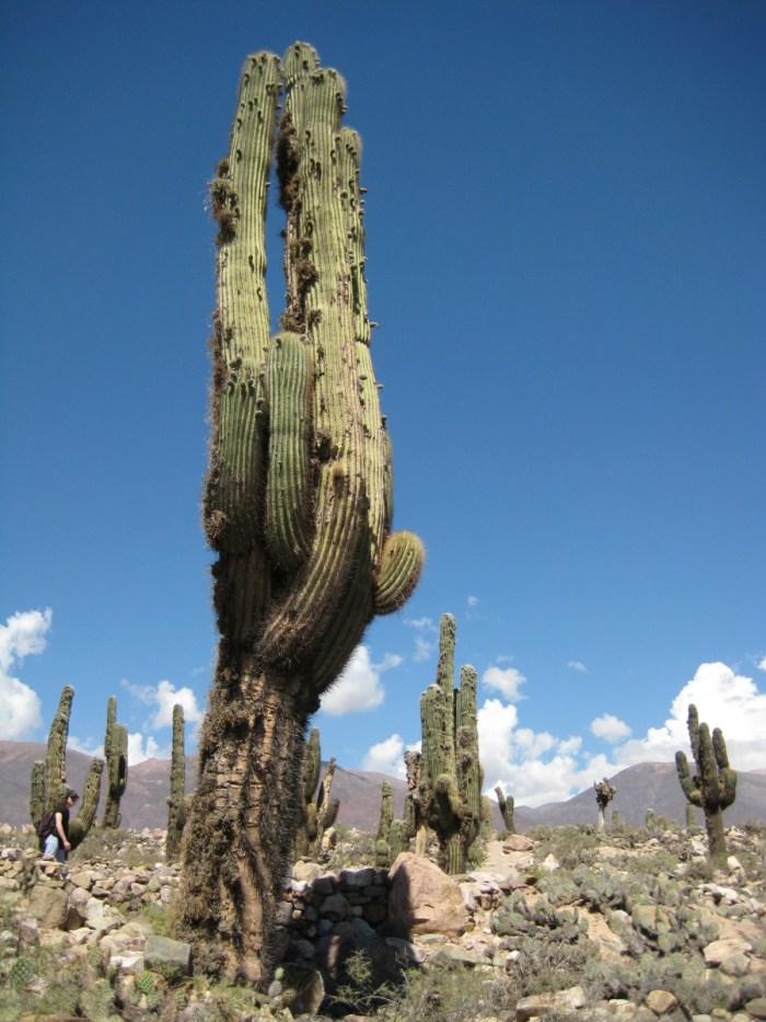 Nationaal Park los Cardones