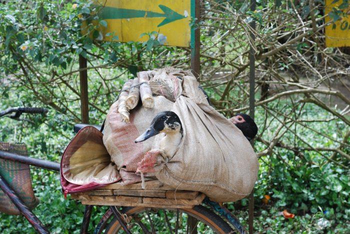 eend achterop fiets