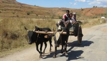 madagaskar kinderen op wagen