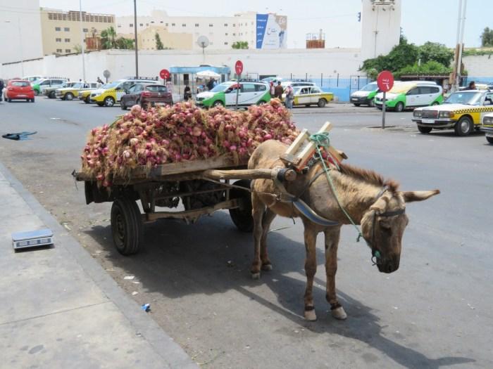 Kar met uien en ezel