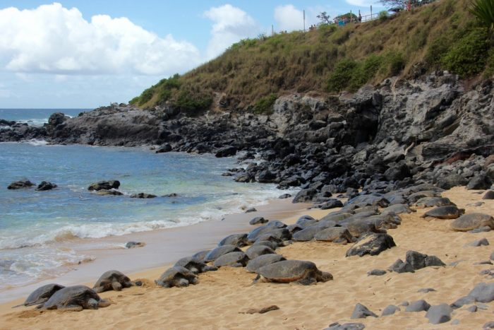Schildpadden op Ho'okipa Beach