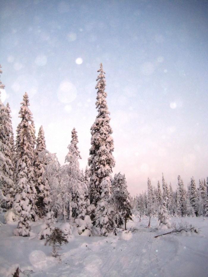 sneeuw in lapland