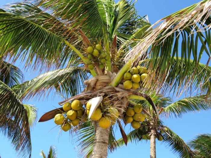 Zon en palmbomen!