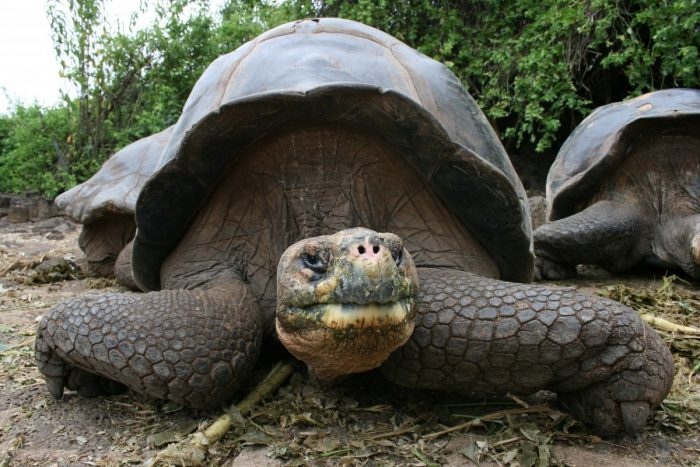 reizenschildpad Galapagos Eilanden