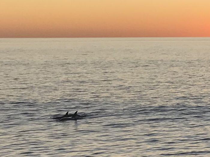 Dolfijnen Francois Peron NP