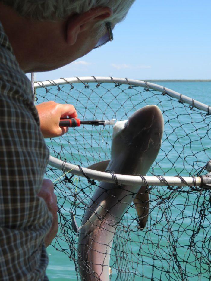 Kees vangt haai