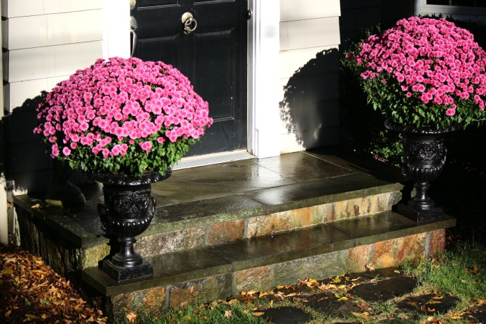 Fall Appeal Urns