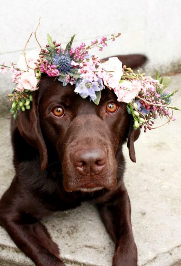 Floral Crown Crush