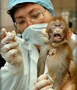 Is there a case for animal testing?