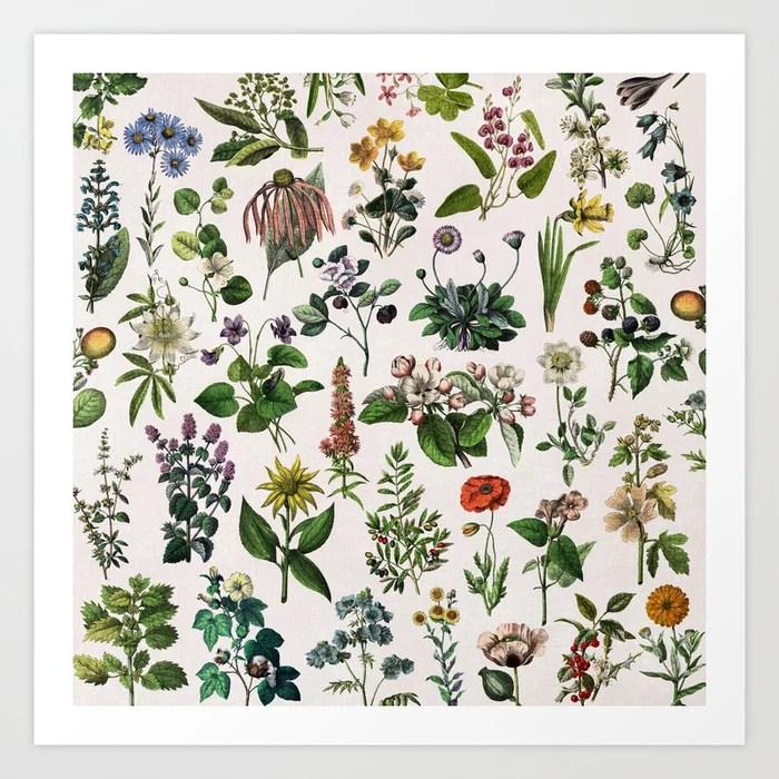 Vintage Botanical Print Art Print By Anniemariedesigns Society6