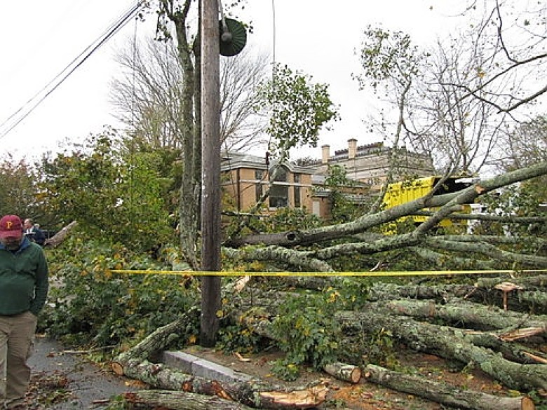 Damaged trees in Stonington in the wake of a significant storm, which is happening more often resulting from climate change