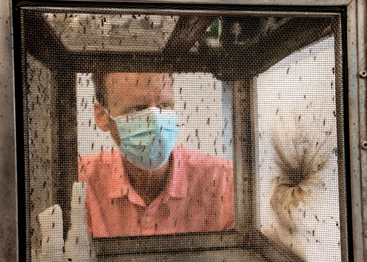 Philip Armstrong, a research scientist at the Connecticut Agricultural Experiment Station, views trapped mosquitoes.