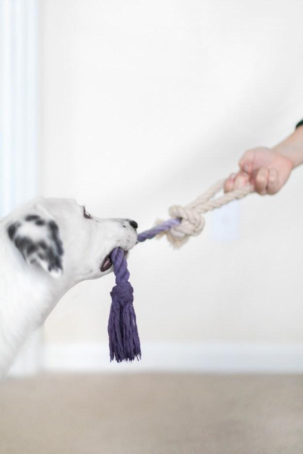 DIY Rope Dog Toy