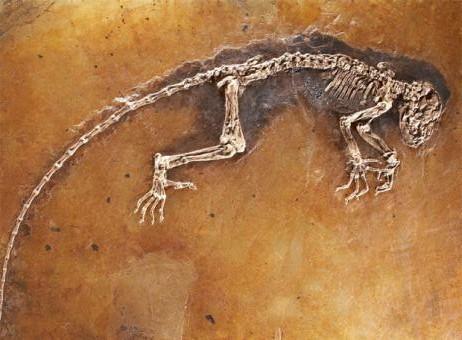fosil_47_millones_anos_da_pistas_evolucion_humana