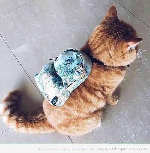 Worksheet. Amor eterno por este gatete y su mochila  Cunto Hipster