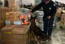 paqueteria-perro-policia