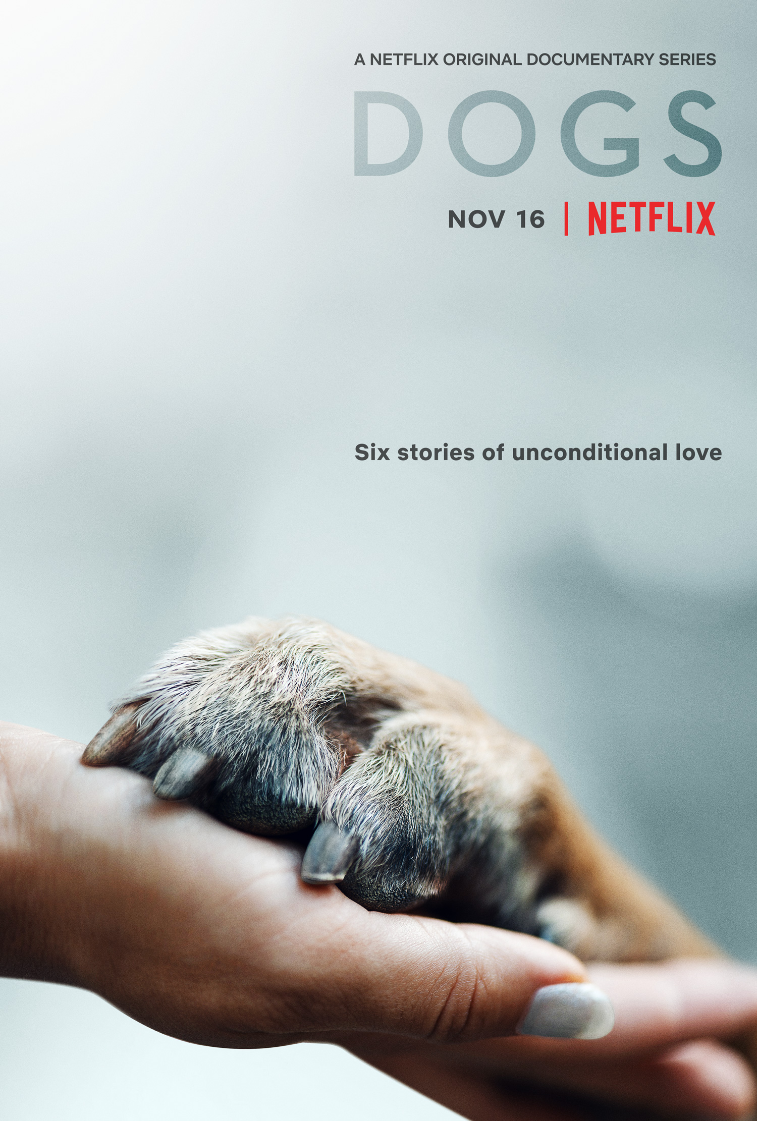 Amigos caninos poster.jpg