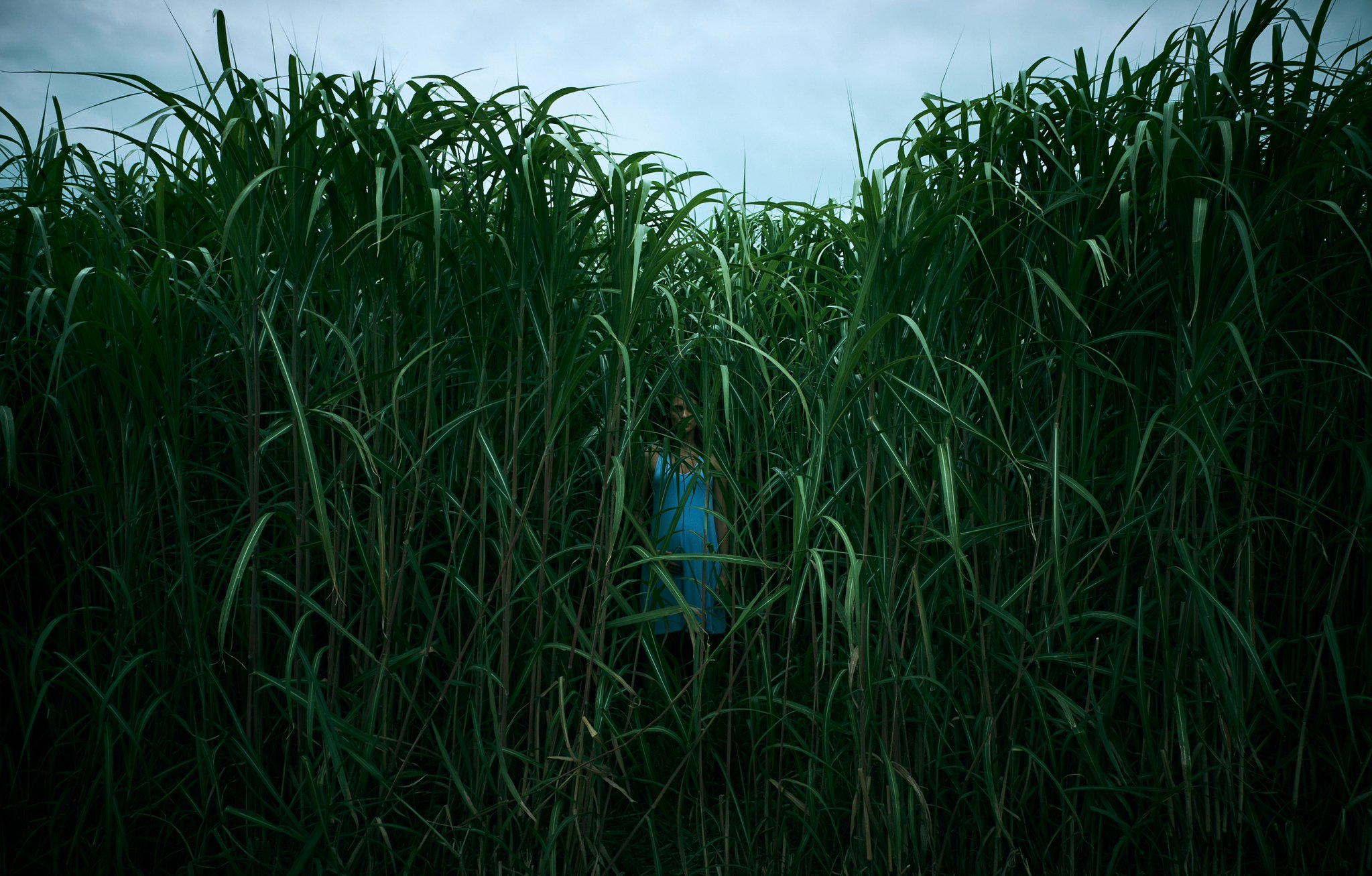In The Tall Grass.jpg