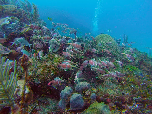 Playa el Salado junto a Cuba Blue Diving