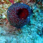 esponja de mar