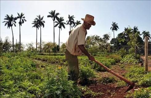 Campesinos cubanos alertan a Bachelet sobre riesgo de hambruna en la Isla