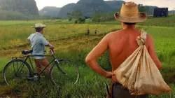 El dilema del campesino cubano
