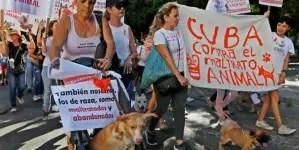 Excluyen a protectores independientes de ley contra maltrato animal en Cuba