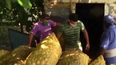 Confiscan cargamento de cebolla en Río Grande, Ciego de Ávila
