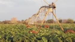 Incongruencias de la política agroindustrial en Cuba