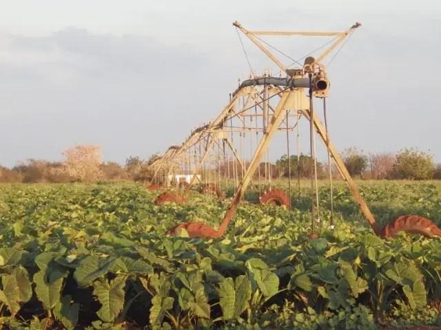 agroindustria Cuba campo