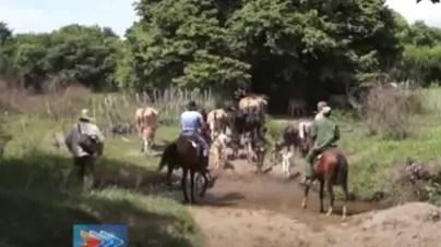 Expropian cuatro fincas y un centenar de animales a cubano repatriado
