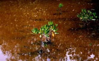El Parque Nacional Desembarco del Granma, tiene en el Guafe un patrimonio con muchos sortilegios aún por descubrir, y es en sí mismo uno de los lugares más atrayentes para el turismo de naturaleza. Foto: Ismael Francisco/Cubadebate.