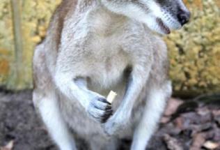 australia-perth-by-bessie-rose-delahunt-joey-murdoch-exchange-spring-2012