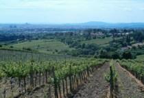 austria-vienna-by-kirstin-bebell-view-of-vienna-from-surrounding-vineyards