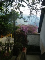 boliviags_by-lex-mobley-flowering-bush-2013