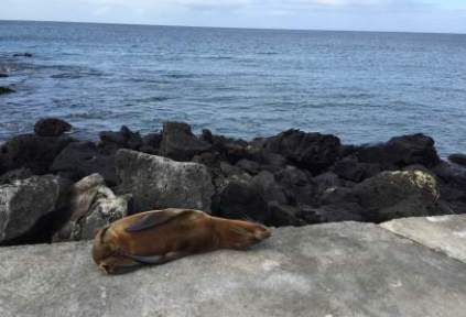 galapagosgs_by-sarah-palmer-sea-lion-2014-2015