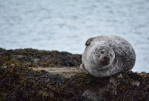 ireland-kenmare-by-hannah-farrar-seal-2014