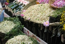 morocco-fes-by-katie-fox-selling-chamomile