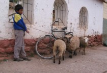 peru-combapata-by-katie-campbell-boy-and-sheep-05