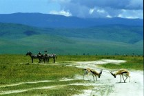 tanzaniags_by-laura-deluca-animals-and-crater-2011